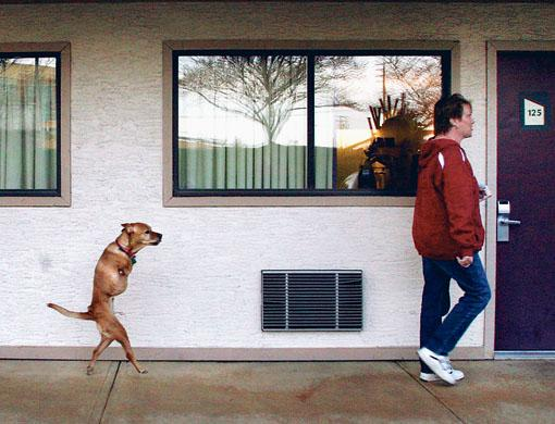 Собака которая ходит прямо