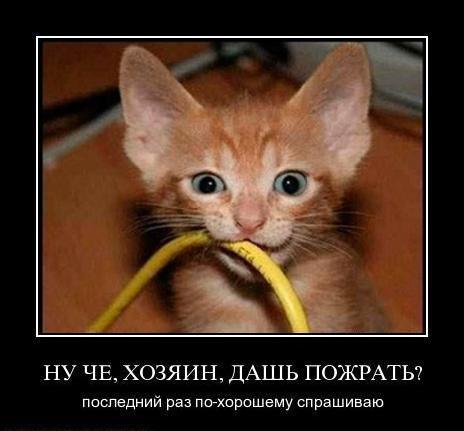 Демотиваторы коты