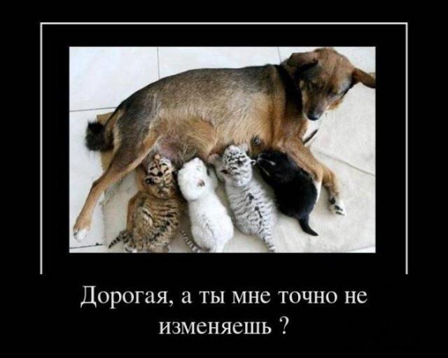 Демотиватор про добрую собачку
