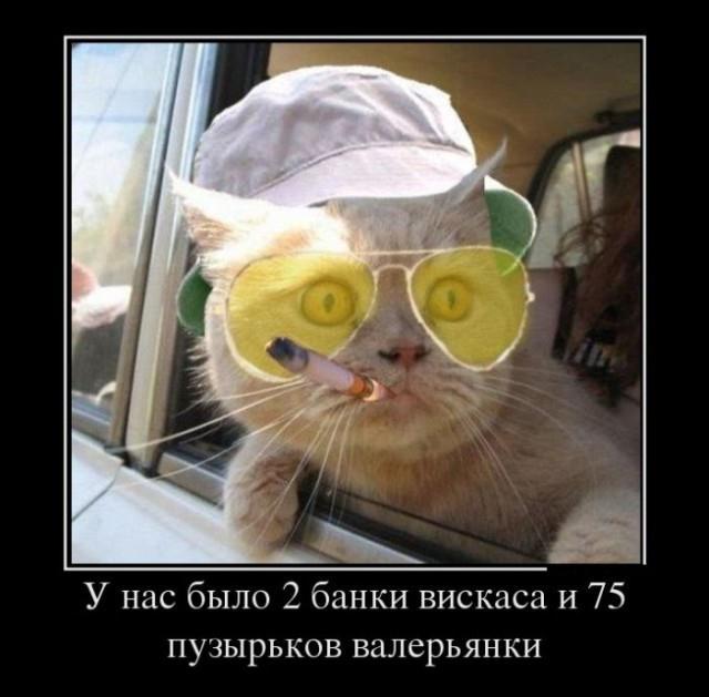 Классные демотиваторы про котов
