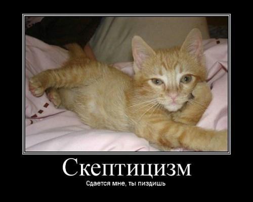 Демотиваторы про кошаков