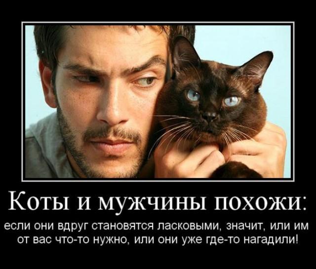 Демотиватор про котов и мужчин