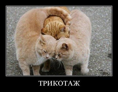 Прикол про котов