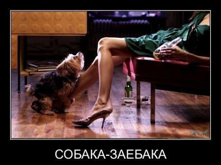 Демотиваторы про собак с юмором