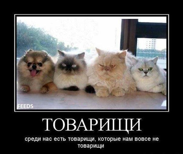Демотиватор про кошачью компанию
