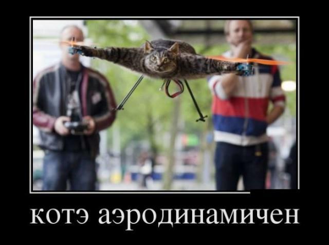 Пятничные демы про котов